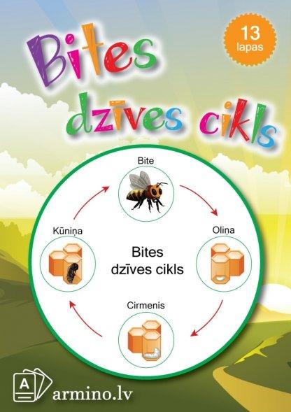 Printējams aktivitāšu krājums Bites dzīves cikls